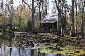 little house houses quaint little house bayou interesting swamp houses photo