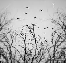 birds flying above trees stock photo 124536226