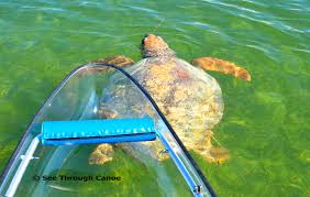clear kayak transparent canoe pictures
