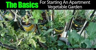 the basics for starting an apartment vegetable garden
