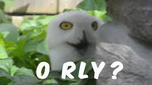 O Really Meme - o really owl youtube