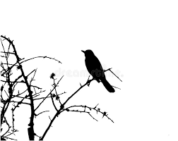 bird in tree sillhouette vector stock photography image 8155652