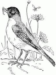 robin in flower garden coloring page download u0026 print online