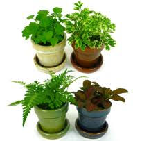 exotic foliage u0026 terrarium plants