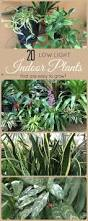 Interior Garden Plants by Best 25 Low Light Plants Ideas On Pinterest Indoor Plants Low