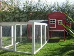 chicken coop pet products gumtree australia free local classifieds