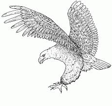 eagle coloring pages free to print coloringstar