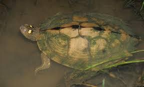 Ouachita Mountains Map Turtles In Oklahoma
