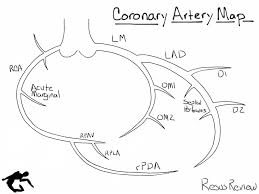 Diagram Heart Anatomy Defining The Coronary Artery Anatomy Is A Critical Step In Any
