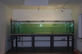Dsc 0410 Jpg Planung Und Bau Südamerika Aquarium Aquarien Vorstellung