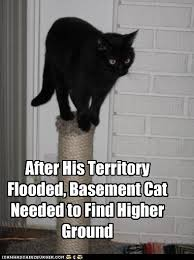 Flooded Basement Meme - after his territory flooded basement cat needed to find higher