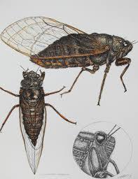 cath hodsman british wildlife and natural history artist
