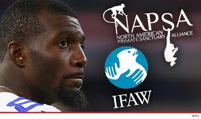 Dez Bryant Memes - dez bryant ripped over supposed pet monkey tmz com