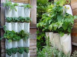 vertical living plant wall lessons tes teach