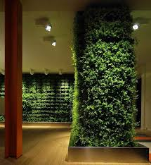 floor plants home decor decorations marvelous indoor plant decoration with green