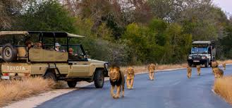 african safari car local knowledge how to u0027safari u0027 like a south african isibindi
