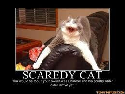 Scared Cat Meme - image result for funniest scared cat memes kitty love pinterest