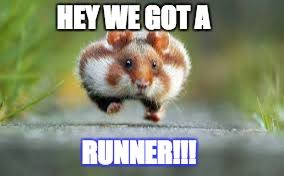 We Got This Meme - hamster running imgflip