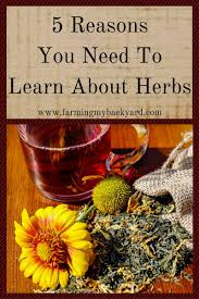 5 reasons you need to learn about herbs farming my backyard