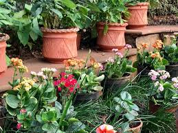 colorful flower gardens juhi chawla on twitter