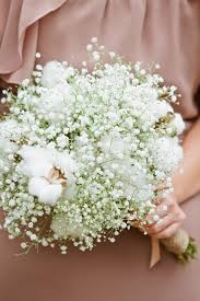 baby s breath bouquet bouquet of baby s breath and cotton