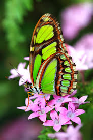 1794 best flowers butterflies dragonflies images on