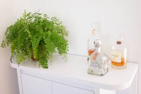 Japanese House Plants 7 Foolproof Secrets To Decorating With Plants Simplicity Relished