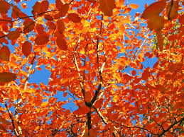 every leaf is a flower wallpaper autumn nature wallpapers in jpg