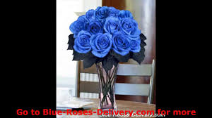 blue roses for sale blue roses and blue roses delivery