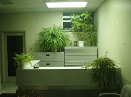 Desk Plant Studies Prove That Desk Plants Can Improve Worker Concentration