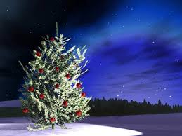 forests night tree outdoor christmas stars snow sky forest images