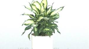 best indoor plants for low light hanging plant low light portalsmo club