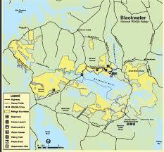 Duck Migration Map The Great Rebound U2014 Chesapeake Bay Magazine