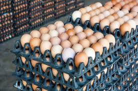 avian flu driving up egg prices could lead to thanksgiving turkey