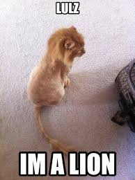 The Lion King Meme - the lion king meme guy