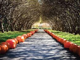 Botanical Gardens Dallas by Garden Tour Of The Dallas Arboretum Hgtv