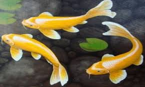 koi free live wallpaper apk free koi fish hd live wallpaper apk for android getjar