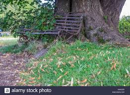 a small metal bench that is being overgrown by trees and shrubs in