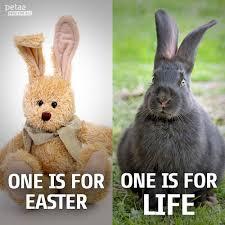 bunnies bunnies bunnies u2026 peta2