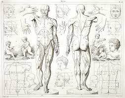 92 best human anatomy artist reference images on pinterest