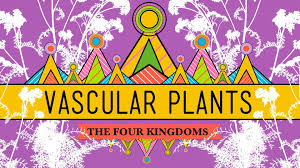 vascular plants u003d winning crash course biology 37 youtube