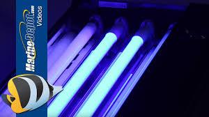 all i want for fishmas 6 ati t5ho bulbs euroquatics e5 lamps
