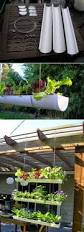 best 25 pvc pipe garden ideas ideas on pinterest irrigation