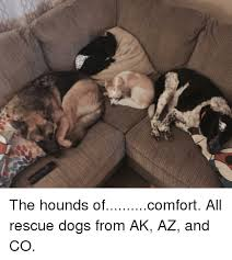 afghan hound rescue az 25 best memes about afghan hound afghan hound memes