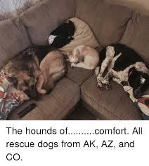 afghan hound rescue north carolina 25 best memes about afghan hound afghan hound memes