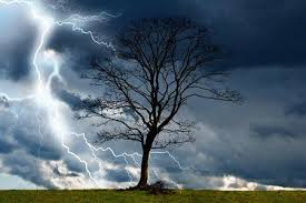 lightning protection w field tree service inc great