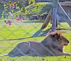 Sunsport Gardens Family Naturist Resort - cabin camping in july picture of lion country safari koa