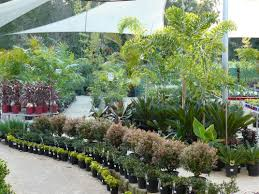 australian garden flowers garden centre and nursery u003esunshine coast queensland
