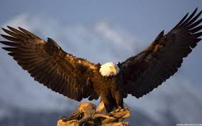 Eagle American Flag Bald Eagle American Flag Pictures Wallpaper
