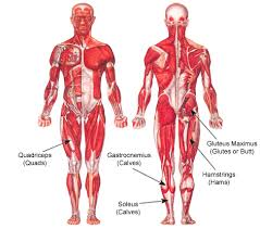 Back Knee Anatomy Lower Extremity Anatomy Parts And Functions New Health Advisor